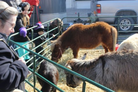 Gallery: Annual Winterfest shows off ice sculptures, animals