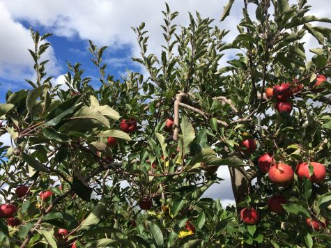 Blake's Apple Orchard Gallery