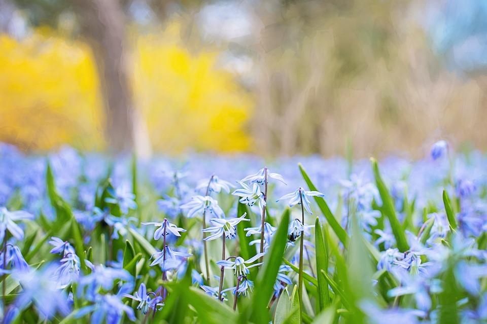 Spring is upon us, and Spring break is coming up. Photo from Creative Commons.