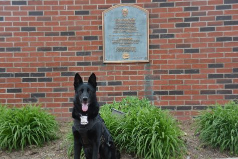 Meet Duke, the fierce but friendly Farms K-9 officer